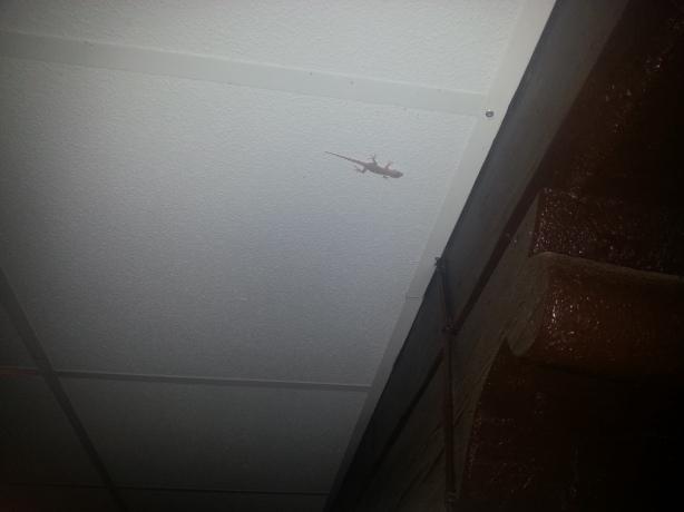 Por el techo.