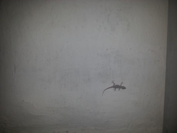 Por la pared